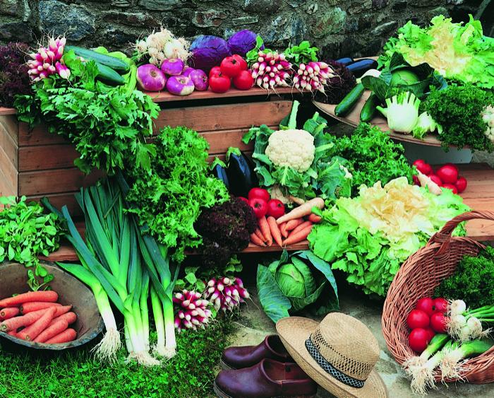 fall vegetable gardening seminar 2015 louisiana nursery