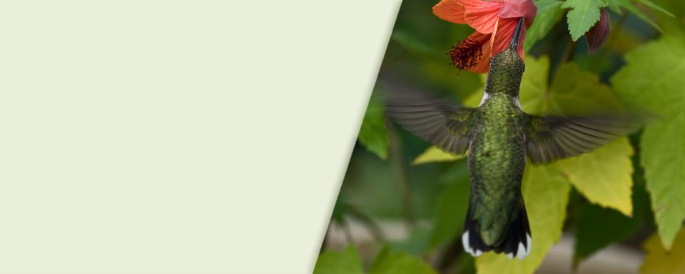 Strong Plants Better Value Louisiana Nursery
